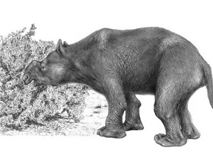 Hé lộ nguyên nhân khiến các loài thú khổng lồ tại châu Phi diệt vong