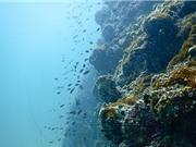 """Phát hiện vi khuẩn dưới đáy biển Thái Bình Dương có thể là """"cứu tinh"""" của thế giới"""
