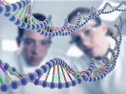 Cả loài người có nguồn gốc từ… một cặp bố mẹ cách đây 200.000 năm?