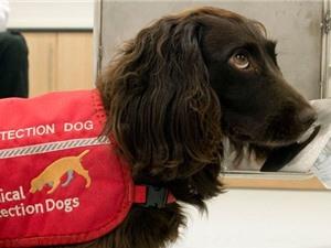 5 căn bệnh loài chó có thể phát hiện