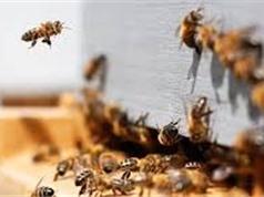 Tìm ra cách khôi phục côn trùng và đàn ong thụ phấn hoa