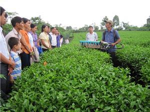 Doanh nghiệp và hợp tác xã: Hạt nhân của chuyển giao công nghệ về nông thôn miền núi