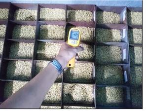 Giảm 70% thời gian nhờ phương pháp sấy lúa mới