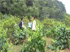 Lạng Sơn: Hội thảo góp ý quy chế quản lý sử dụng tem nhãn bao bì sản phẩm