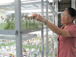 """Đèn LED dùng chiếu sáng trong nông nghiệp: Sản phẩm của """"ba nhà"""""""