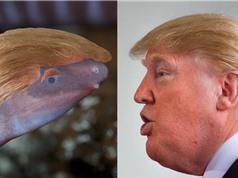 Loài lưỡng cư vùi đầu trong cát được đặt tên theo Tổng thống Donald Trump