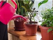 Mỹ nghiên cứu cây biến đổi gien có thể lọc không khí trong nhà