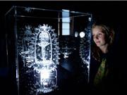 Tác phẩm điêu khắc thủy tinh về Virus