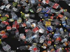 Châu Âu chính thức tẩy chay đồ nhựa dùng một lần