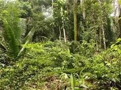 Lý giải được vẻ đa dạng của các cánh rừng nhiệt đới