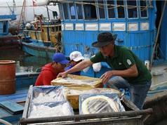 Chính sách phát triển thủy sản giúp nghề cá vươn khơi