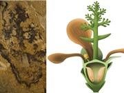 Phát hiện hóa thạch thực vật có hoa cổ nhất thế giới