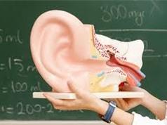 Phát hiện cơ chế giúp khôi phục thính lực cho người