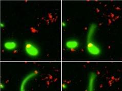 """Lần đầu tiên các nhà khoa học đã bắt gặp cảnh vi khuẩn biết """"câu""""… DNA"""