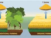 Thực phẩm hữu cơ làm cho khí hậu trở nên tệ hơn?