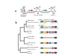 Lần đầu tiên giải mã được hệ gene của cá tra