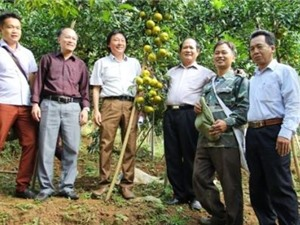 Bắc Kạn: Ứng dụng công nghệ cao trong sản xuất rau và Xây dựng mô hình sản xuất quýt bền vững theo hướng VietGAP