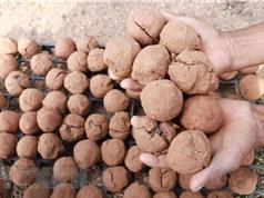 """Việt Nam ứng dụng """"bom hạt giống"""" để tái tạo hệ thực vật vùng khô hạn"""