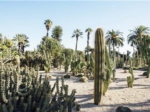 Các nhà khoa học xem xét chiến lược thu gom nước từ không khí sa mạc
