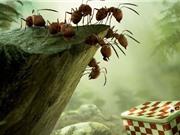 Tuần phim Thế giới côn trùng quanh ta