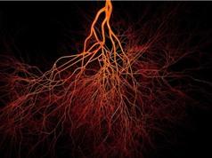 Phát hiện ra loại mạch máu mới ẩn trong xương