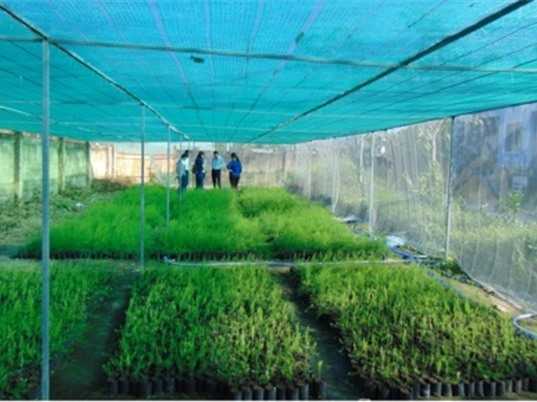 Trà Vinh: Nghiên cứu khảo nghiệm giống và thực hiện quy trình kỹ thuật trồng măng tây thương phẩm theo hướng hữu cơ