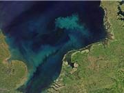 Nóng lên toàn cầu sẽ khiến các đại dương đổi màu