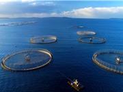 Chiến lược nuôi biển bền vững của Việt Nam