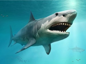 Cá mập trắng lớn đã quét sạch siêu cá mập Megalodon khổng lồ?