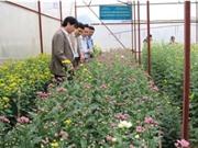 Hà Tĩnh: Mô hình thâm canh dưa lưới và hoa cúc trong nhà màng tại xã Bắc Sơn