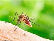 Dùng thuốc giảm trọng lượng để khống chế muỗi gây bệnh