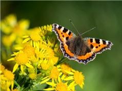 Côn trùng tuyệt chủng hàng loạt trong thế kỷ tới có thể dẫn đến sự sụp đổ của các hệ sinh thái tự nhiên