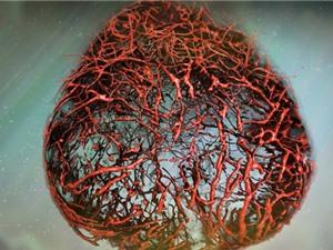Lần đầu tiên nuôi thành công mạch máu của người từ tế bào gốc