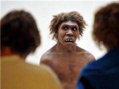 Các nhà khoa học công bố phát hiện mới về người Neanderthal
