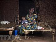 Phát hiện 'vũ khí' mới trong cuộc chiến chống sốt rét