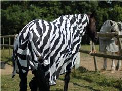 Vằn của ngựa vằn để làm gì?