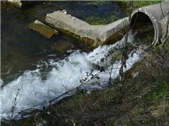 Ô nhiễm thuốc ở các con sông gây hại cho động vật và hệ sinh thái