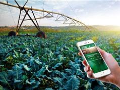 """""""SỐNG SÓT"""" với khởi nghiệp nông nghiệp công nghệ cao"""
