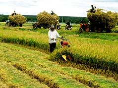 Xuất khẩu gạo Việt Nam giảm mạnh trong tháng đầu năm
