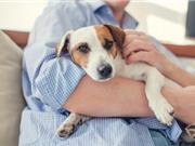 """Hóa chất gia dụng làm suy giảm chất lượng """"con giống"""" của cả người và chó"""