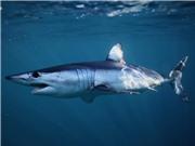 Da cá mập gợi ý quân đội Mỹ cải tiến máy bay