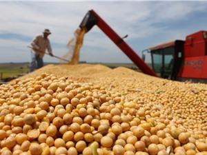 Hai gợi ý từ nền nông nghiệp của Argentina