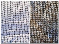 Nuôi cá biển quy mô công nghiệp: Xử lý bám bẩn sinh học bằng sơn của Steen-Hansen