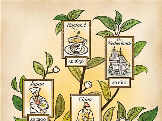 Bí mật tiến hóa của cây chè