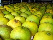 Hà Tĩnh: Ứng dụng màng bọc sinh học trong bảo quản quả cam, bưởi