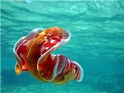 Cách sên biển di chuyển có thể ứng dụng cho robot thân mềm trong tương lai