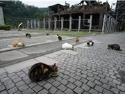 Hầu Động: Mỏ than bỏ hoang thành điểm du lịch nổi tiếng nhờ mèo