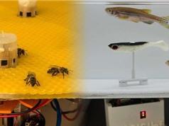 Robot cho phép cá và ong giao tiếp với nhau lần đầu tiên