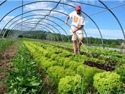 """Canh tác hữu cơ: """"Bí kíp"""" thách thức thời tiết của nông dân Ấn Độ"""