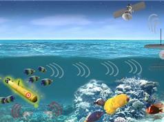 Phát hiện tàu ngầm đối phương nhờ những con tôm pháo